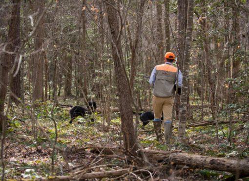 Guided-Hunts-in-North-Carolina