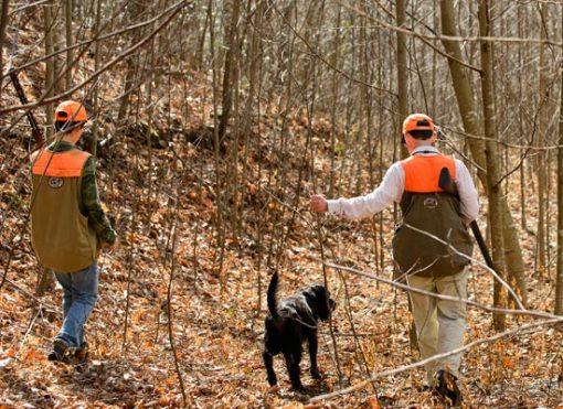 Guided-Hunts-in-Virginia